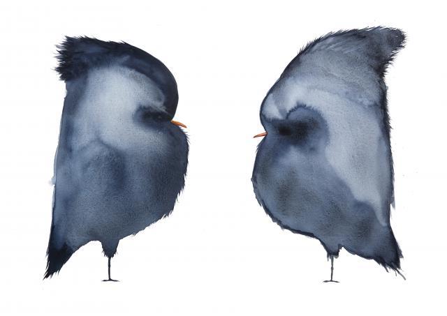 Studio C x Paul Faassen - Iedere vogel is een mens